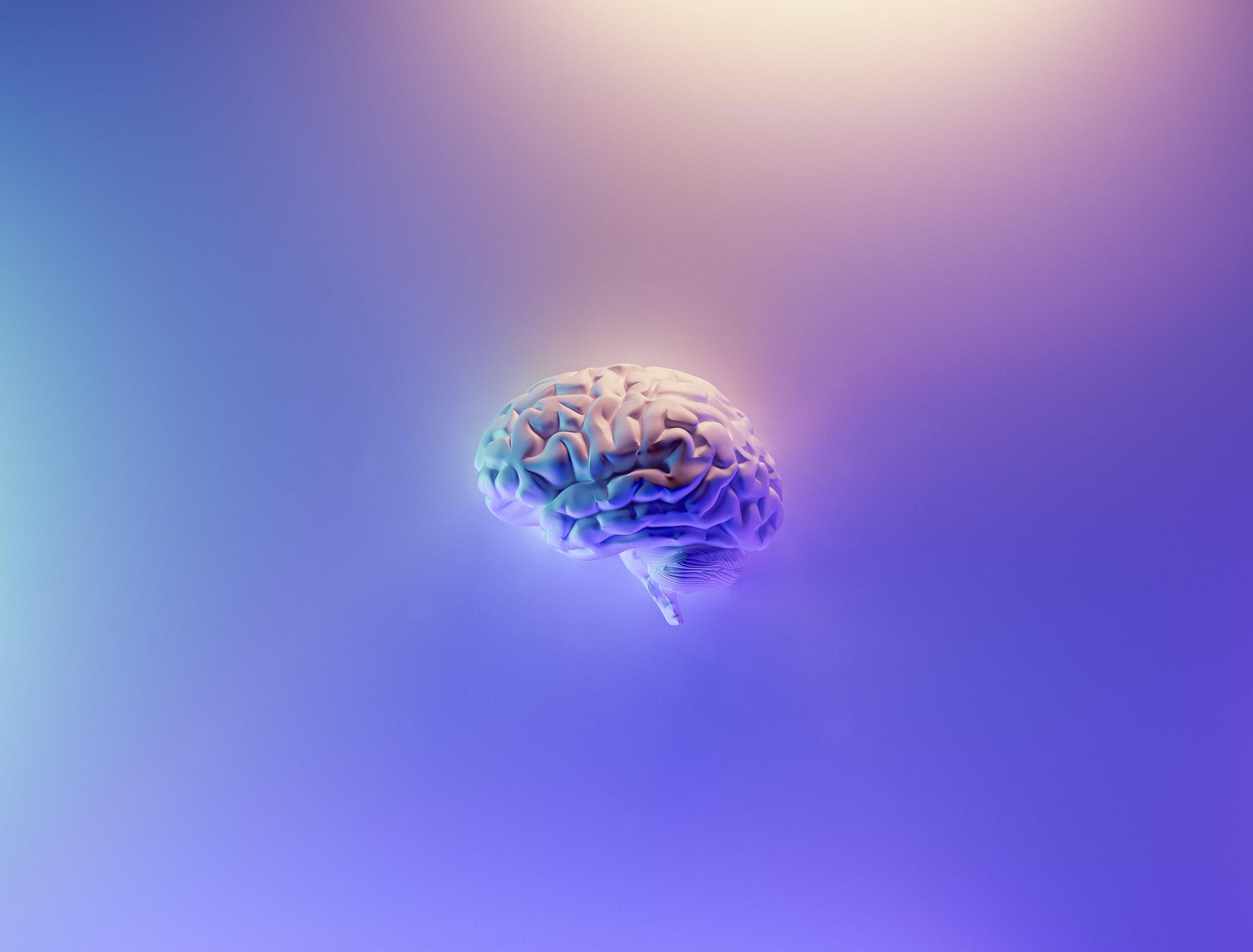 Nutrientes para el cerebro